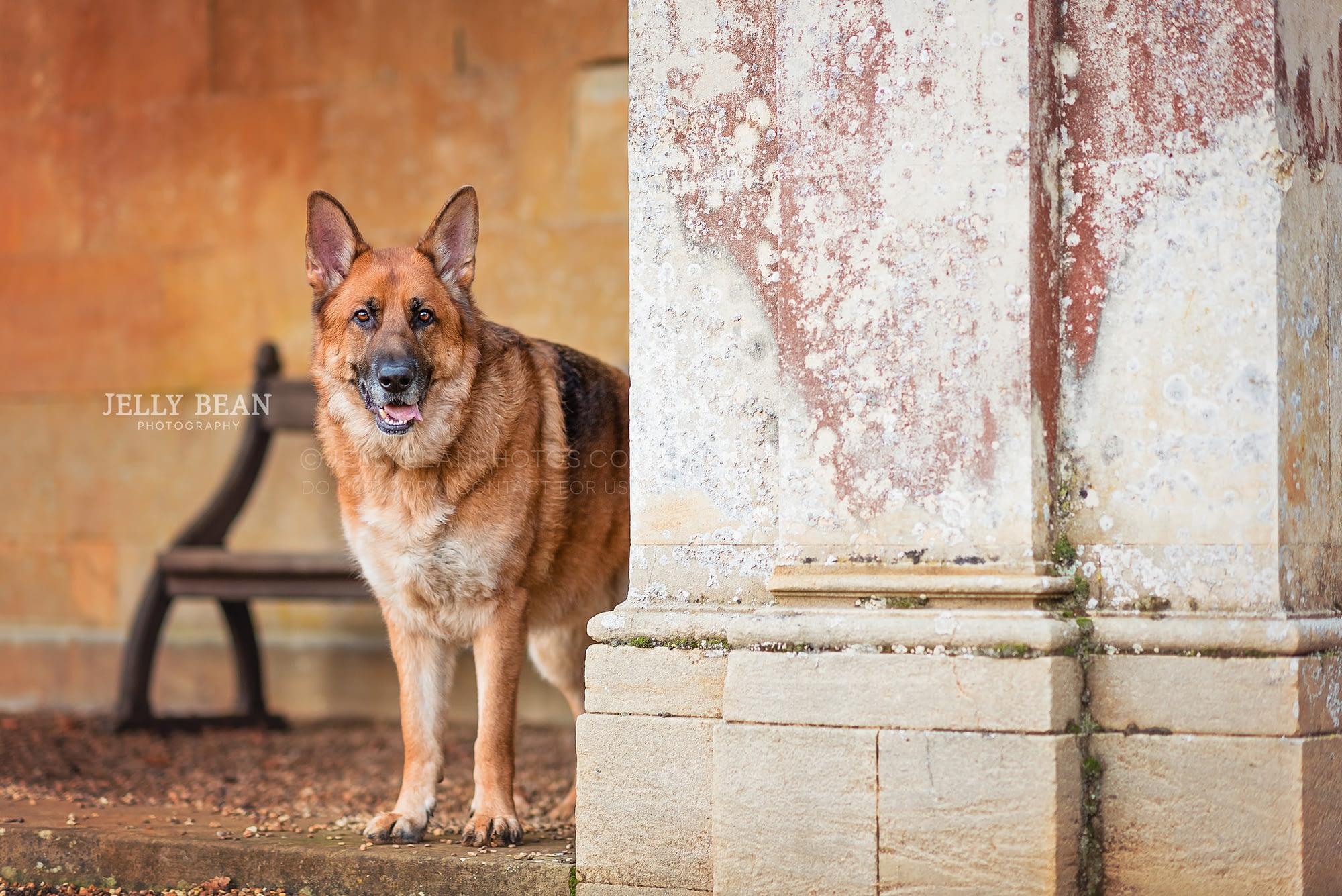 Dog standing next to pillar