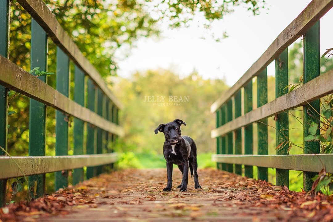 puppy standing on a bridge