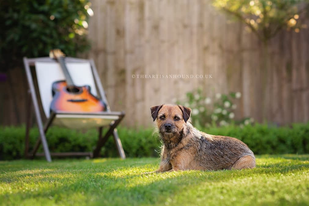 A TRIP TO CAMBRIDGESHIRE: MILLIE THE BORDER TERRIER