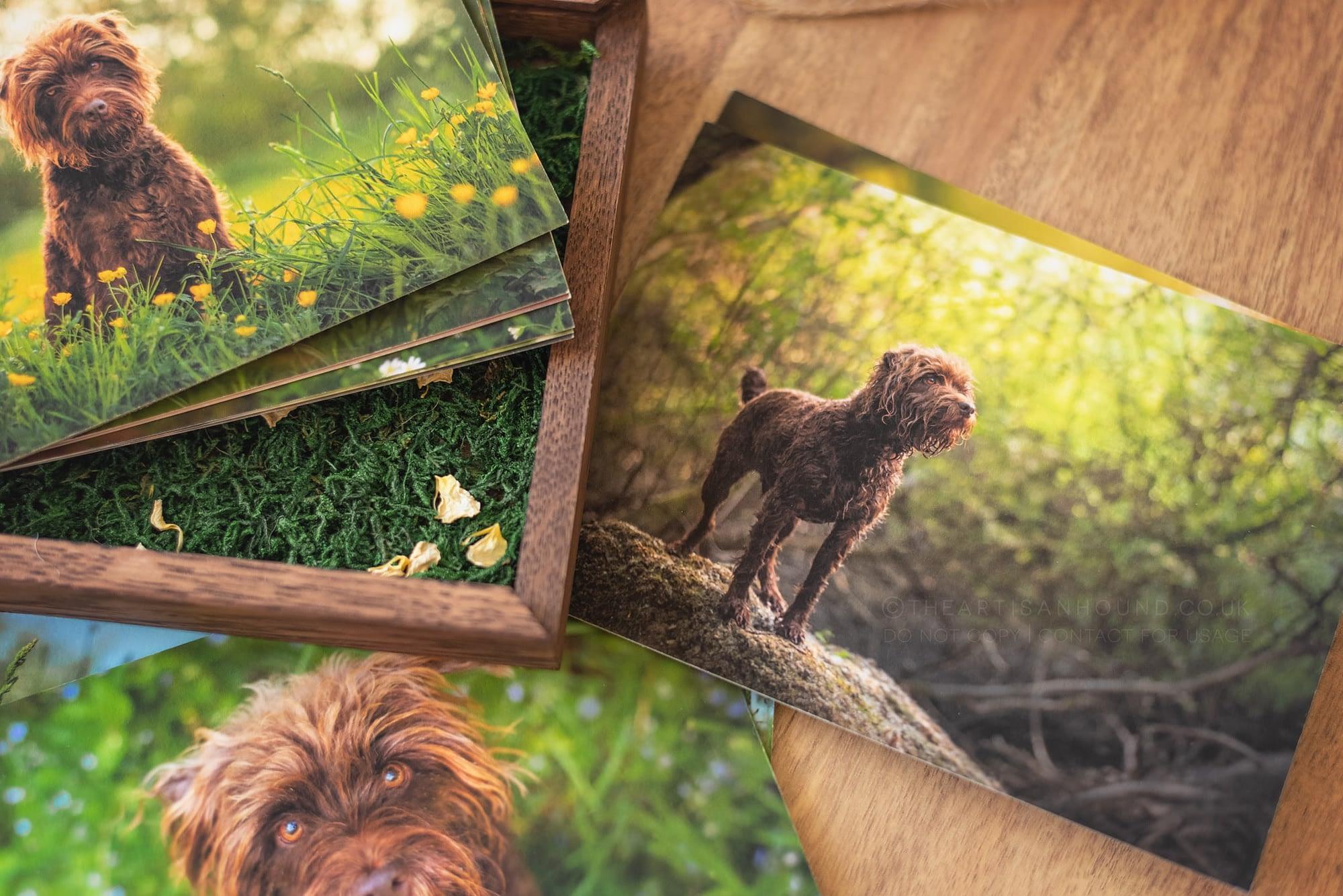 dog photography prints