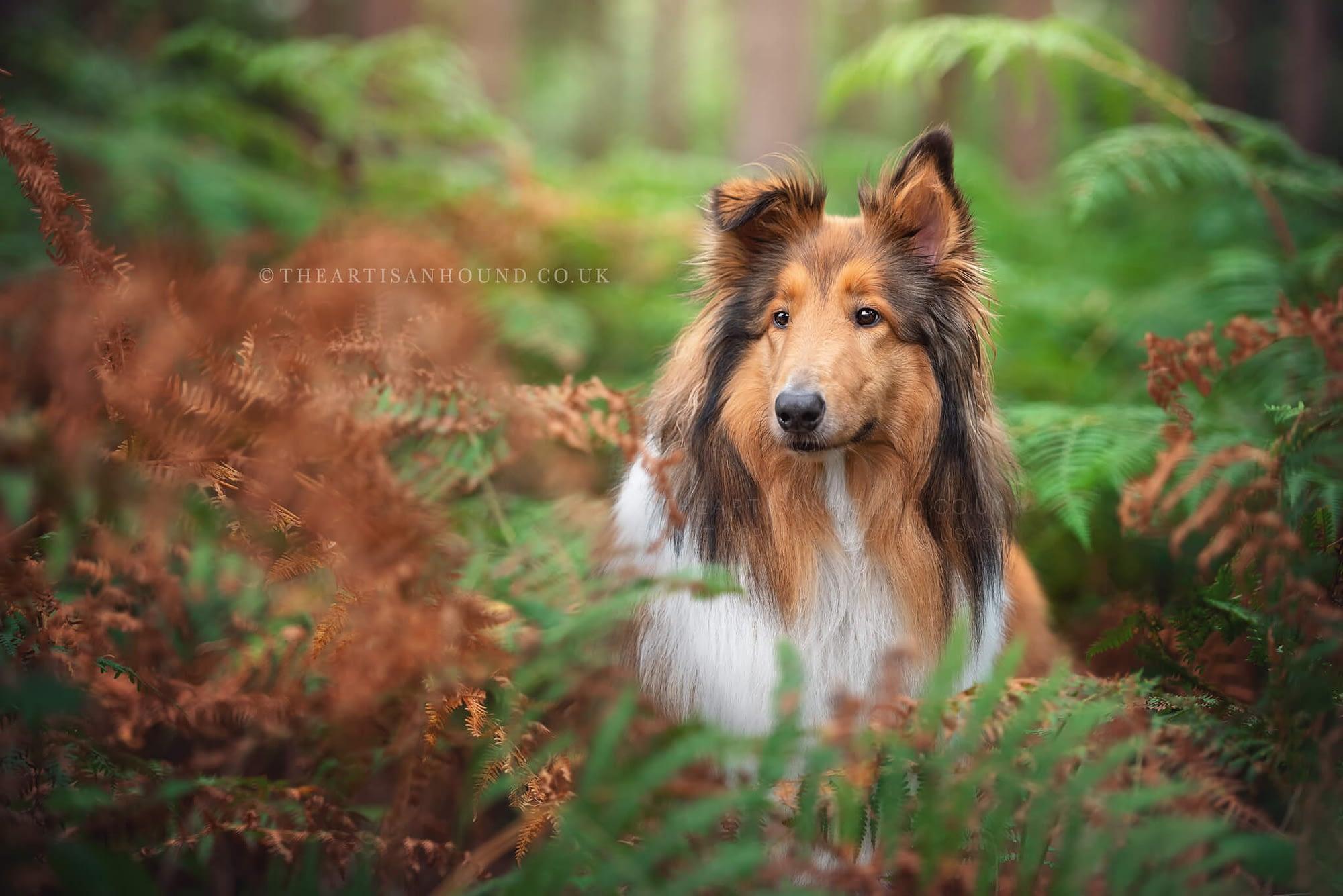 portrait of dog Harlestone Firs Northampton