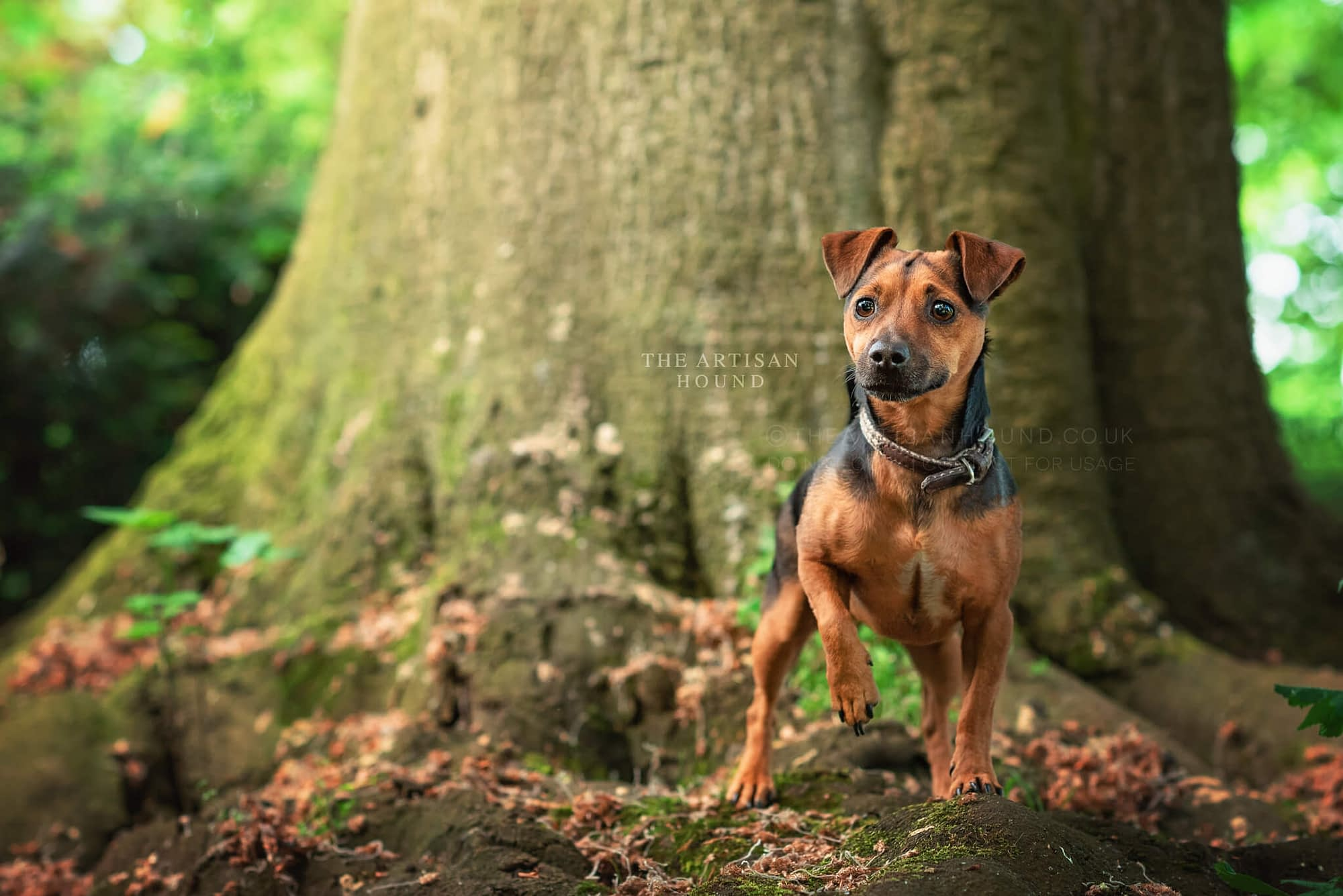 Small terrier standing on tree roots in Abington Park