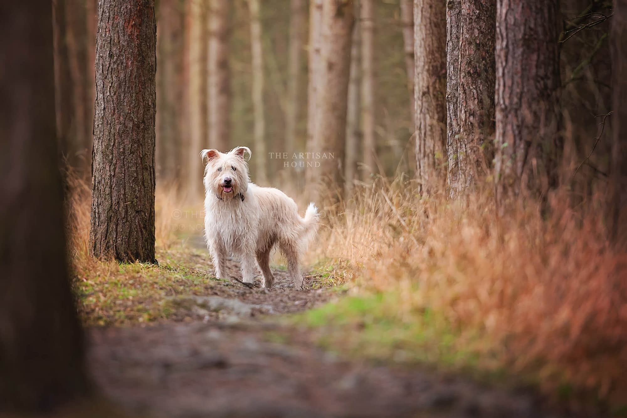 Scruffy dog standing among trees in Little Irchester Country Park