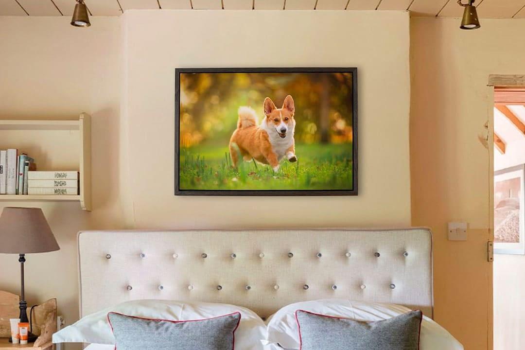 Framed canvas of corgi hanging on bedroom wall