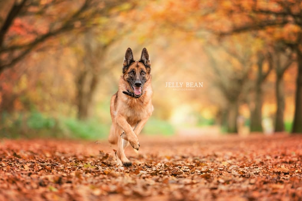 PEPE   NORTHAMPTON DOG PHOTOGRAPHY