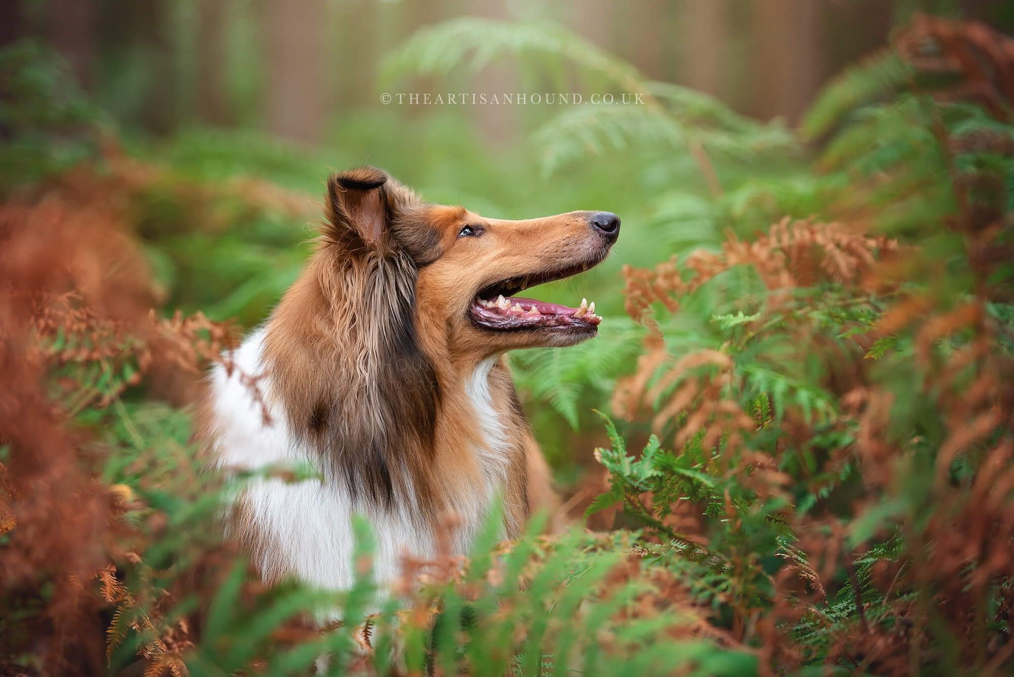 dog portrait photography Northampton