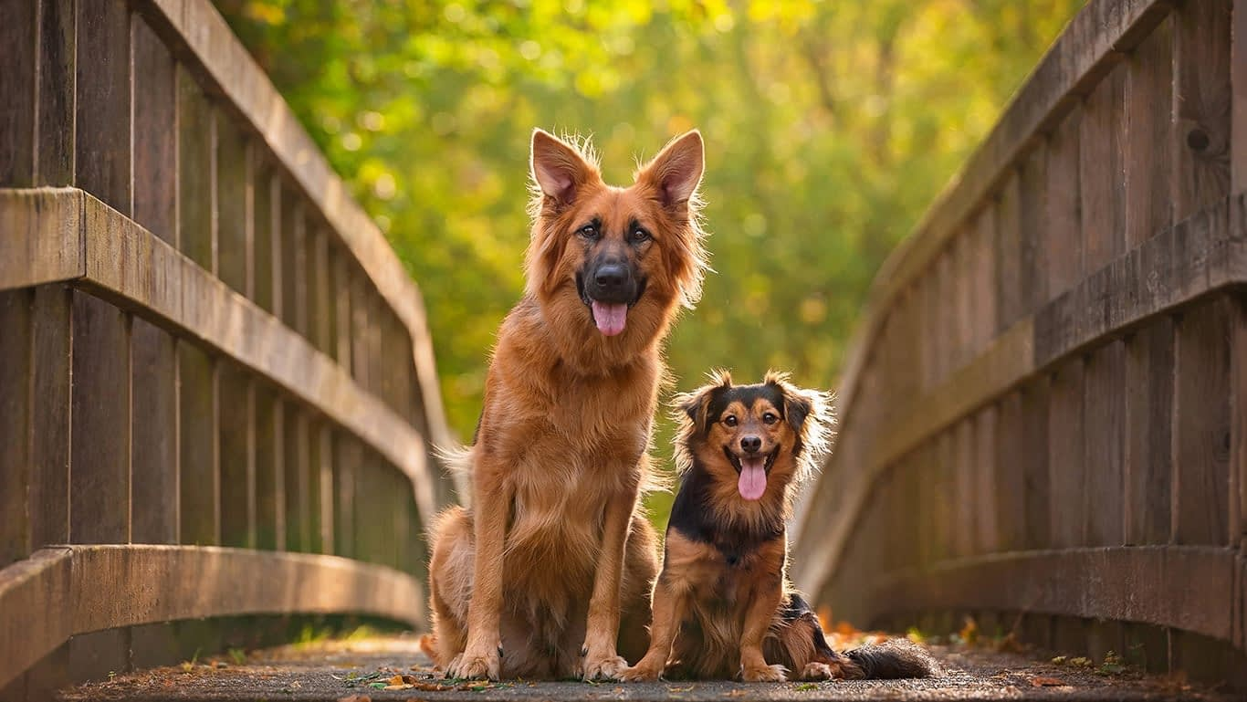 Photo of two dogs sitting on bridge in Kettering Northamptonshire