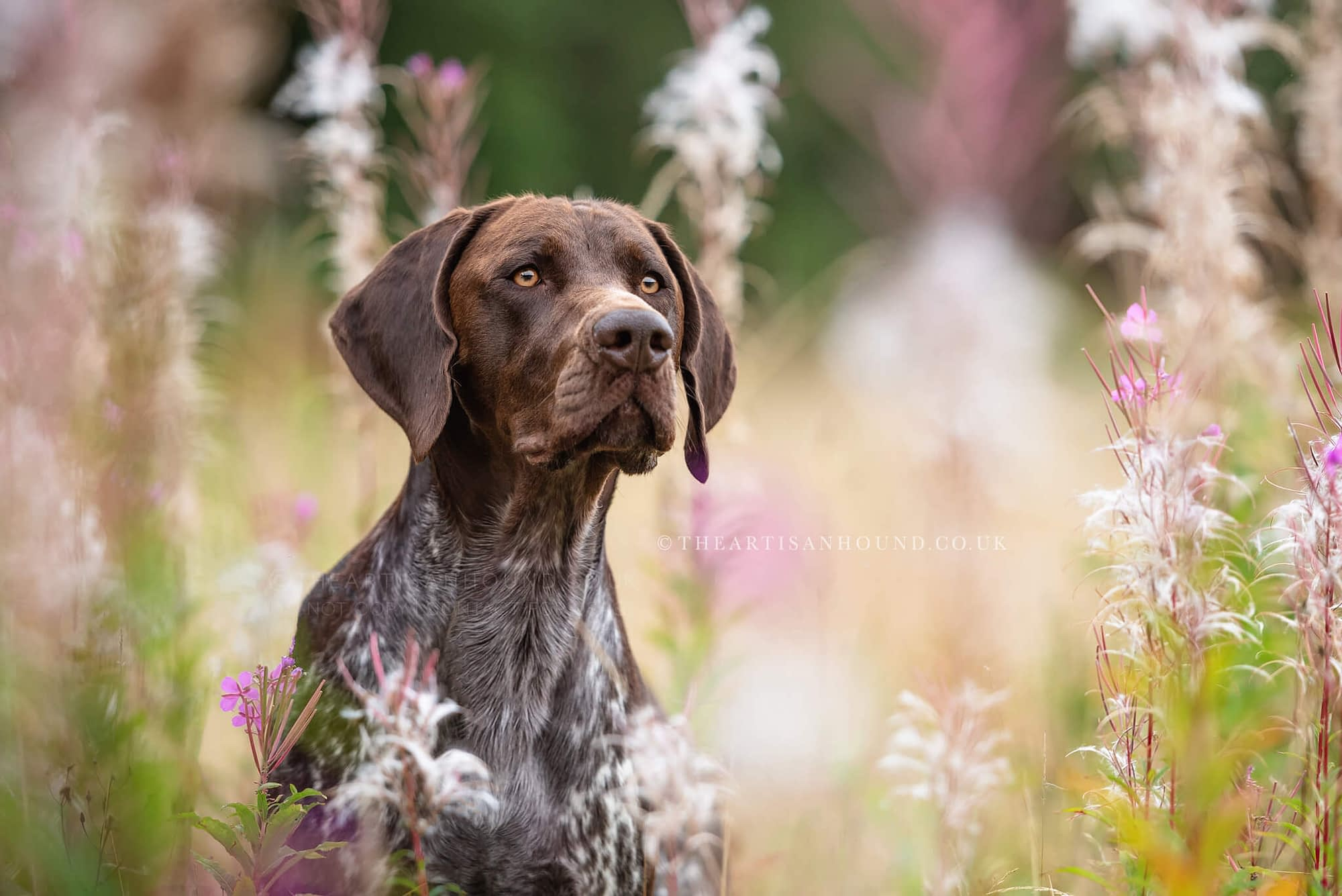 Pointer dog in flowers