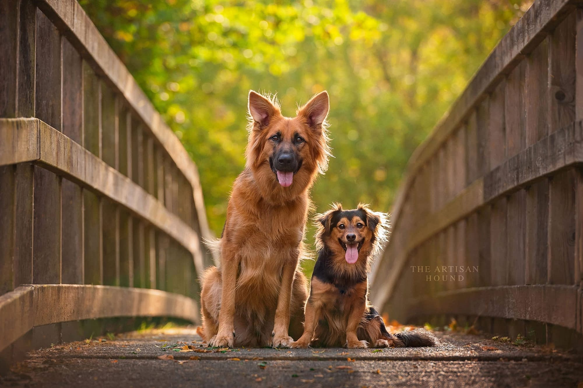 Two crossbreed dogs sitting on bridge in summer parkland