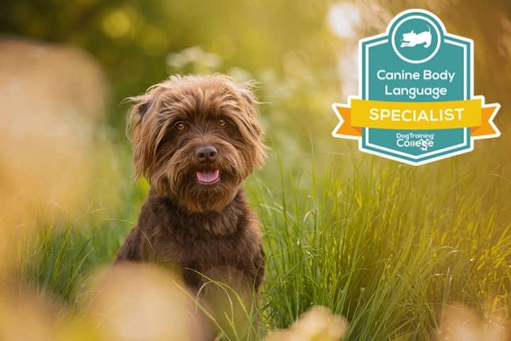 brown terrier crossbreed dog sitting in summer meadow in Wellingborough with body language qualification logo