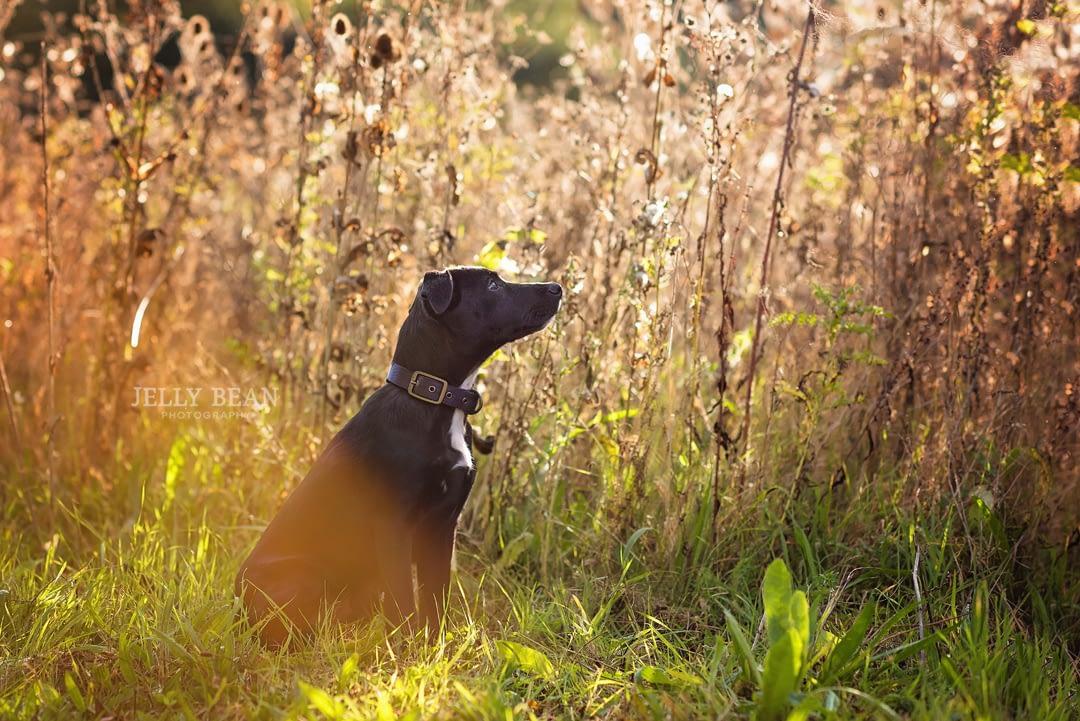 Black puppy sitting in sunshine