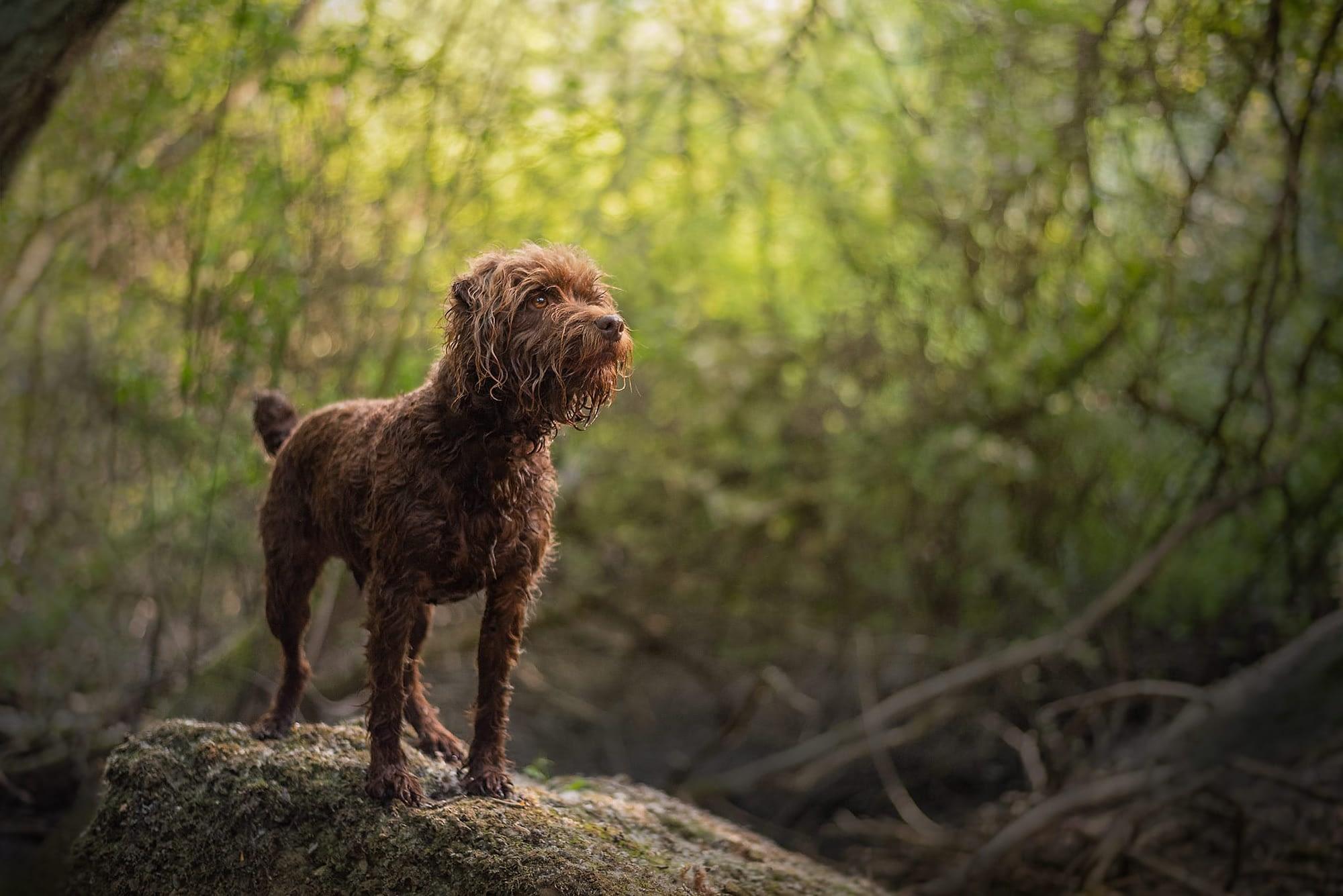 small brown terrier in wellingborough woods