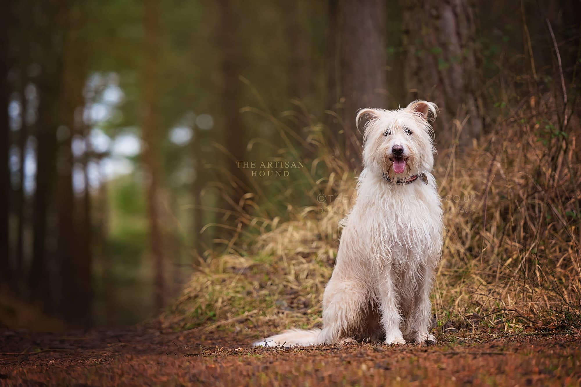 Crossbreed dog sitting by trees in Northamptonshire woodland