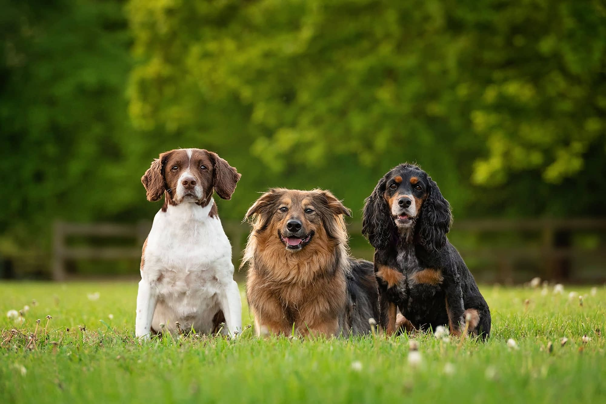 three dogs sitting in field for photography