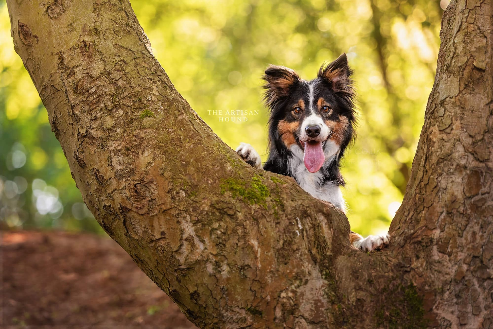 Border Collie dog with paws up against tree