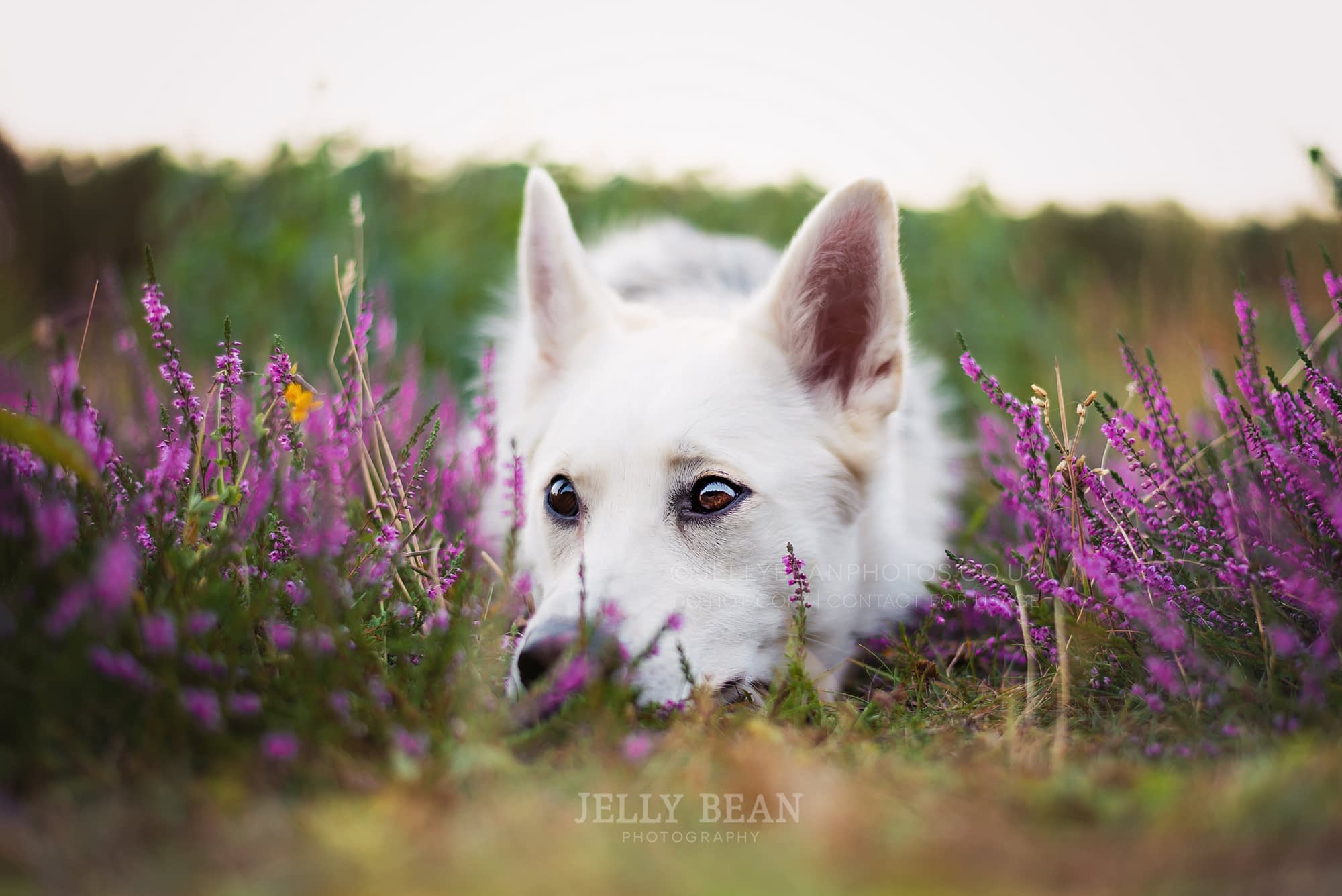 white dog in flowers