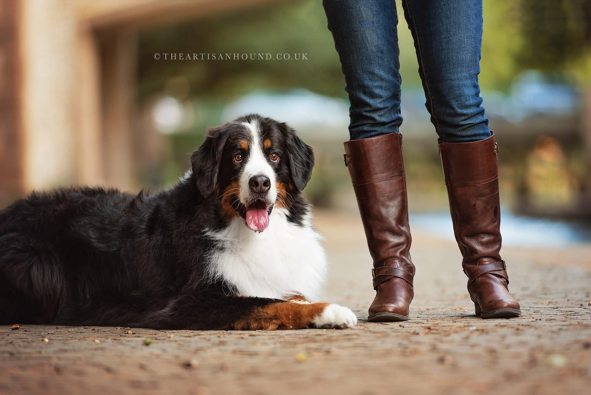 Berner dog sitting beside owners feet