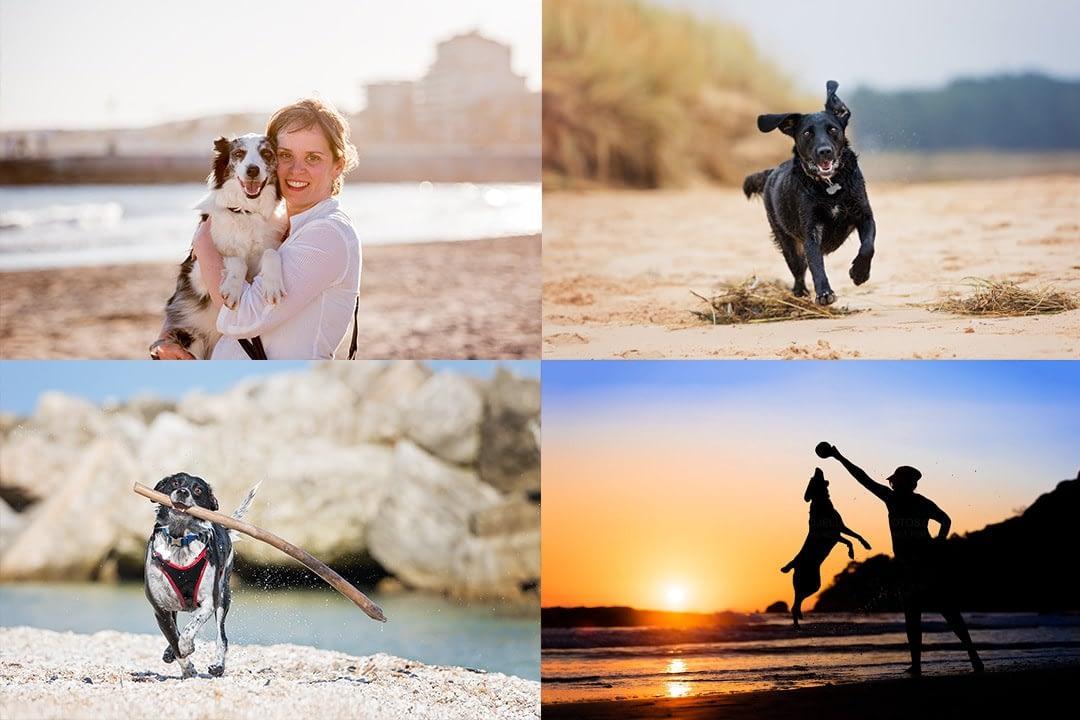 Beagle portrait photograph