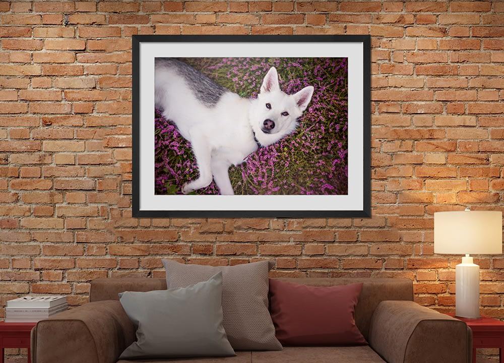 Black framed print of husky hanging above sofa