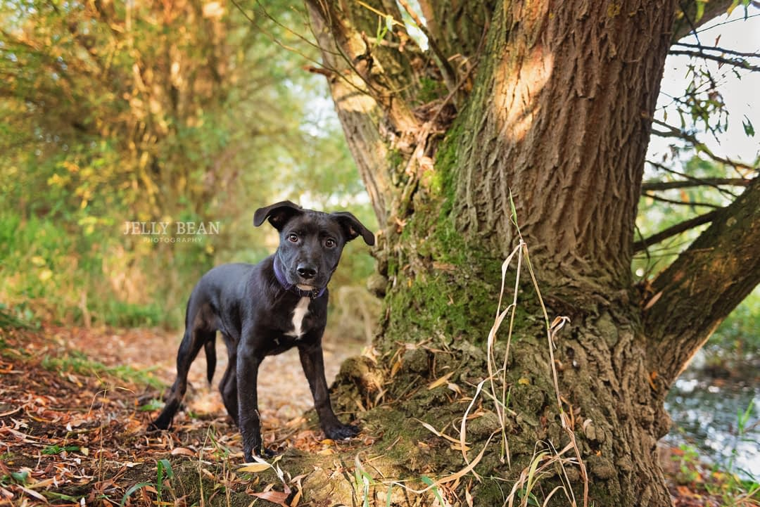 dog exploring near a tree