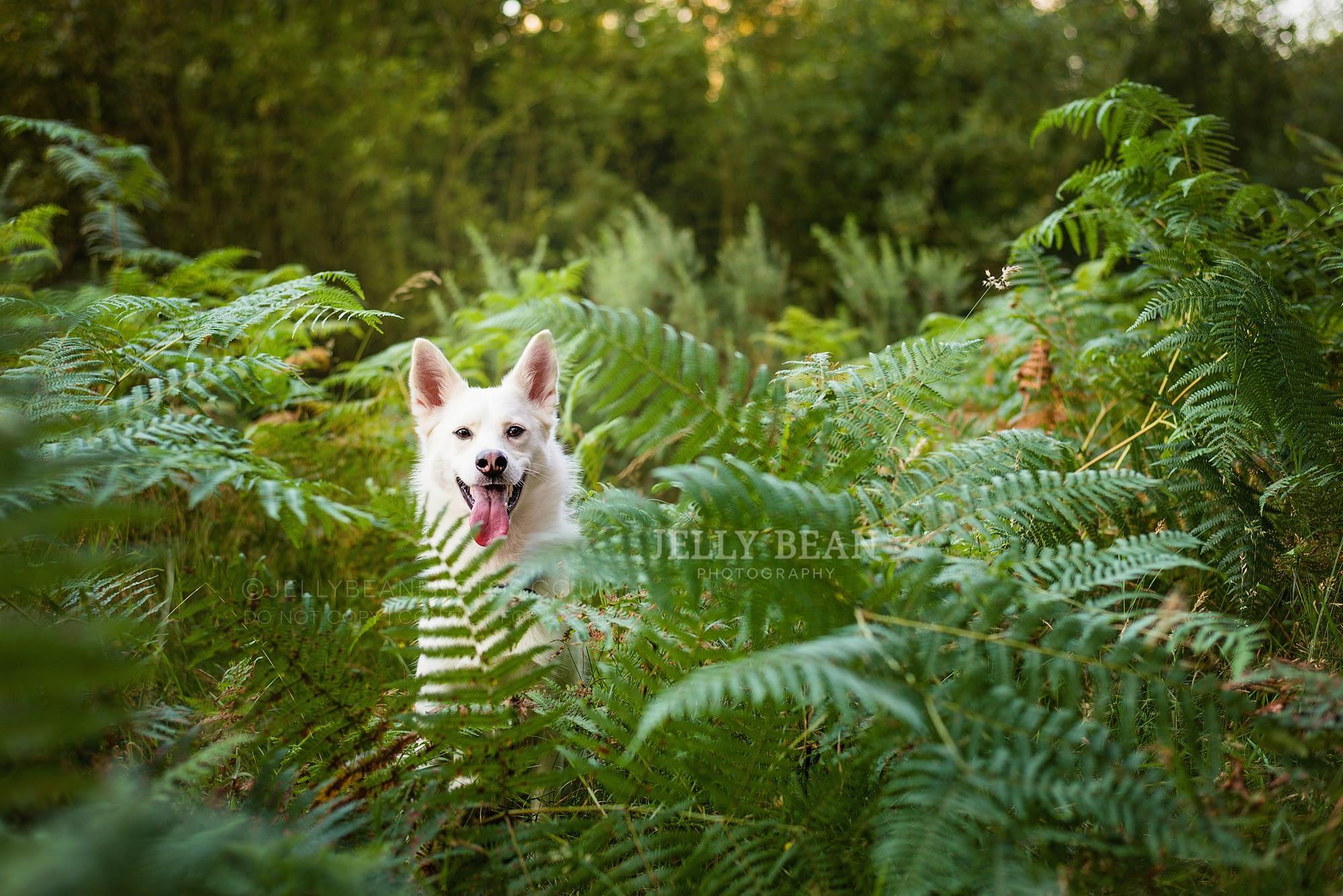 white dog in ferns