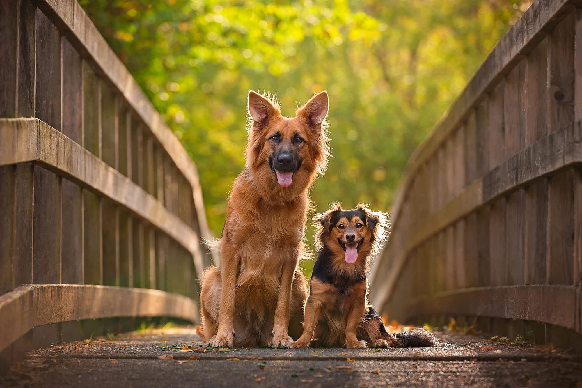 two mixed breed dogs sitting on bridge in kettering