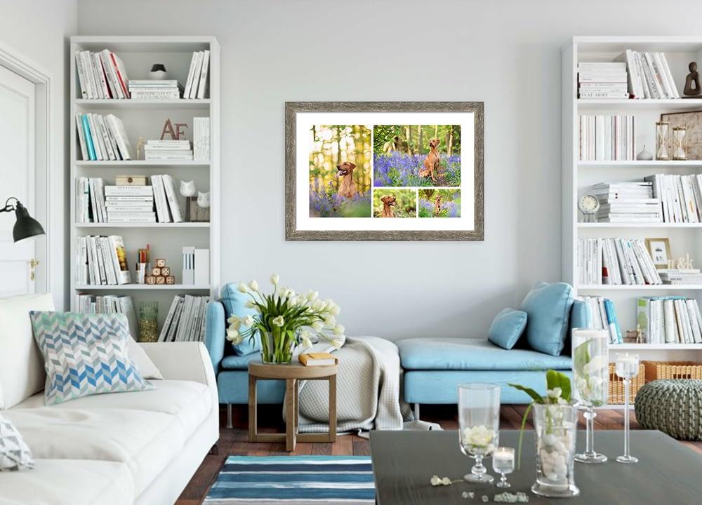 Framed storyboard of red Labrador in lounge