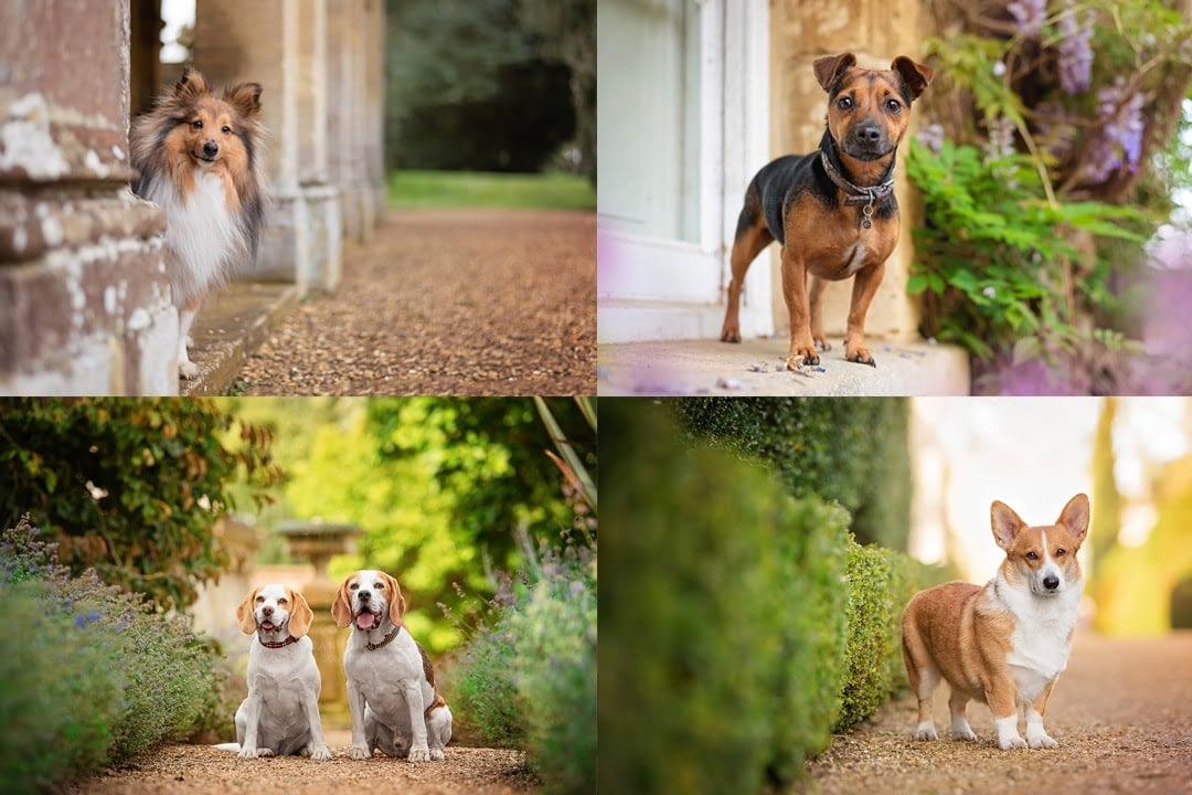 Dog photography Northamptonshire
