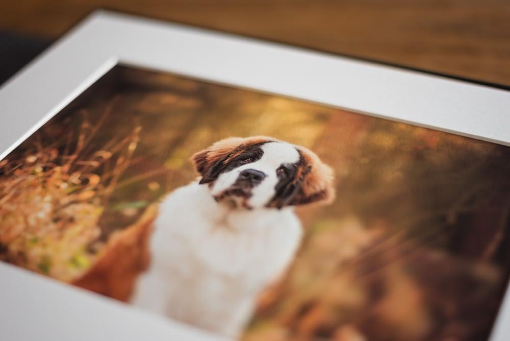 fine art prints in folio box