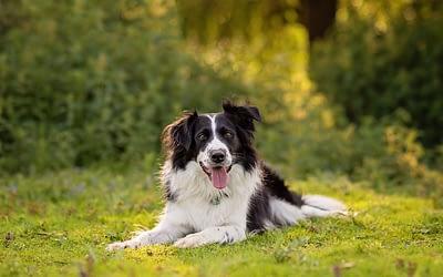 UNDERSTANDING YOUR SUBJECT: 'SPEAKING DOG'