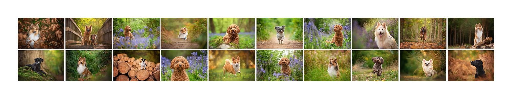 Josie Baughan Dog Photographer MPA Qualification Panel