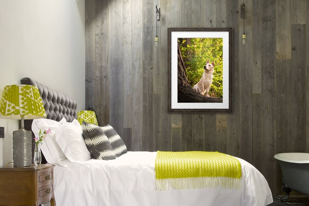 Dog photo in dark frame on bedroom wall