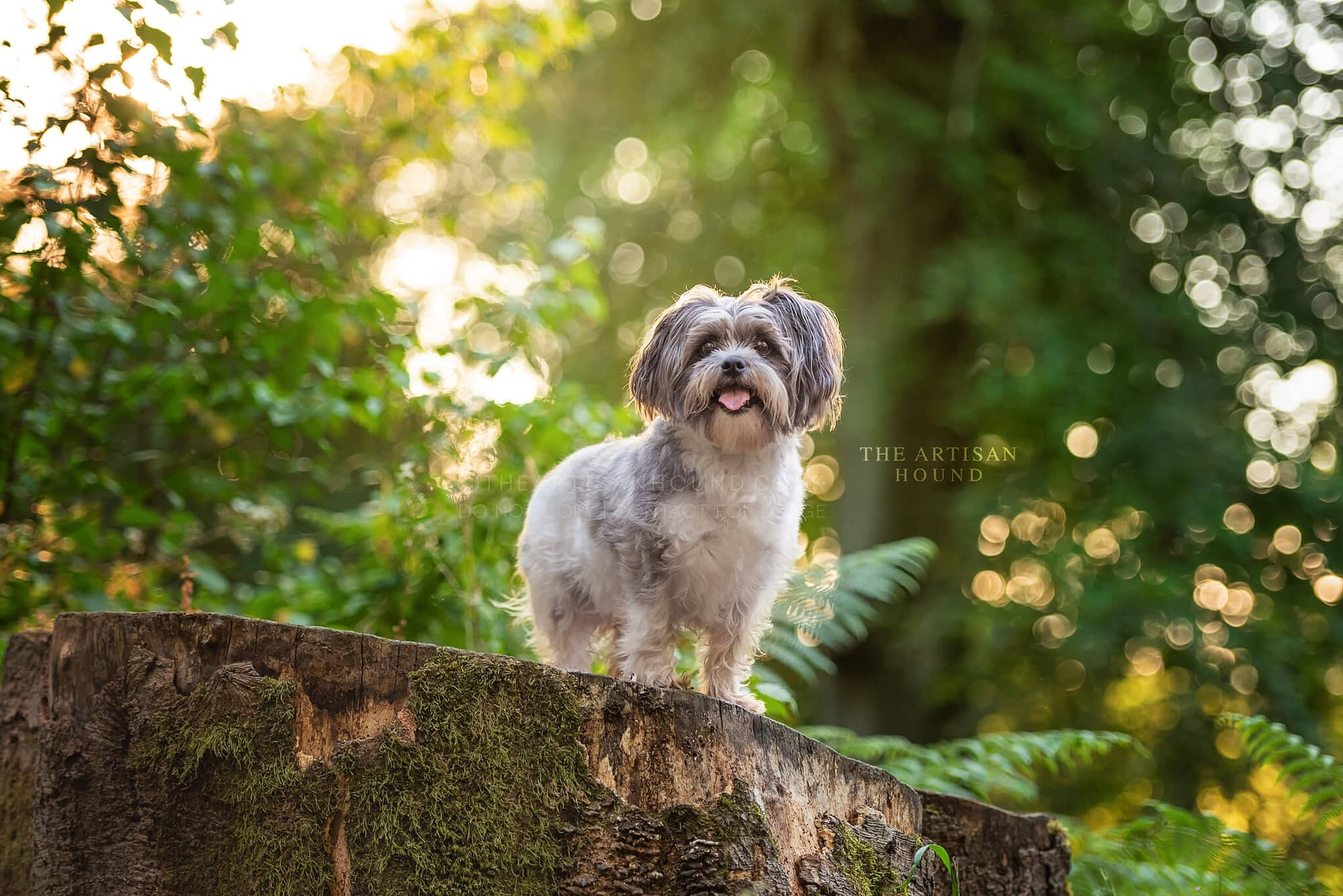 Little dog standing on tree stump in forest