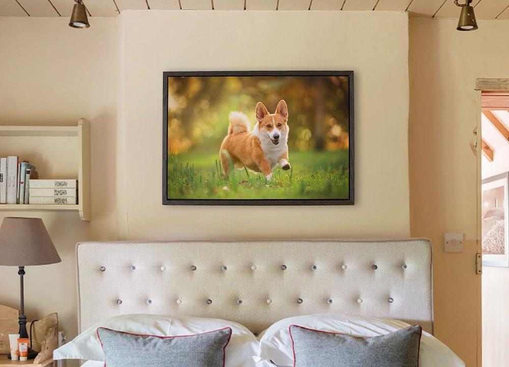 framed canvas of running corgi hanging on bedroom wall