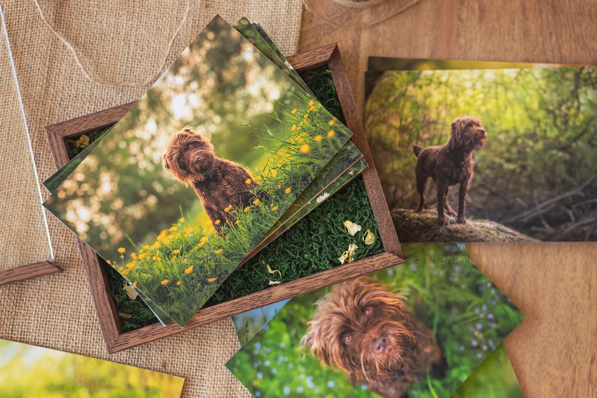dog photo prints in box