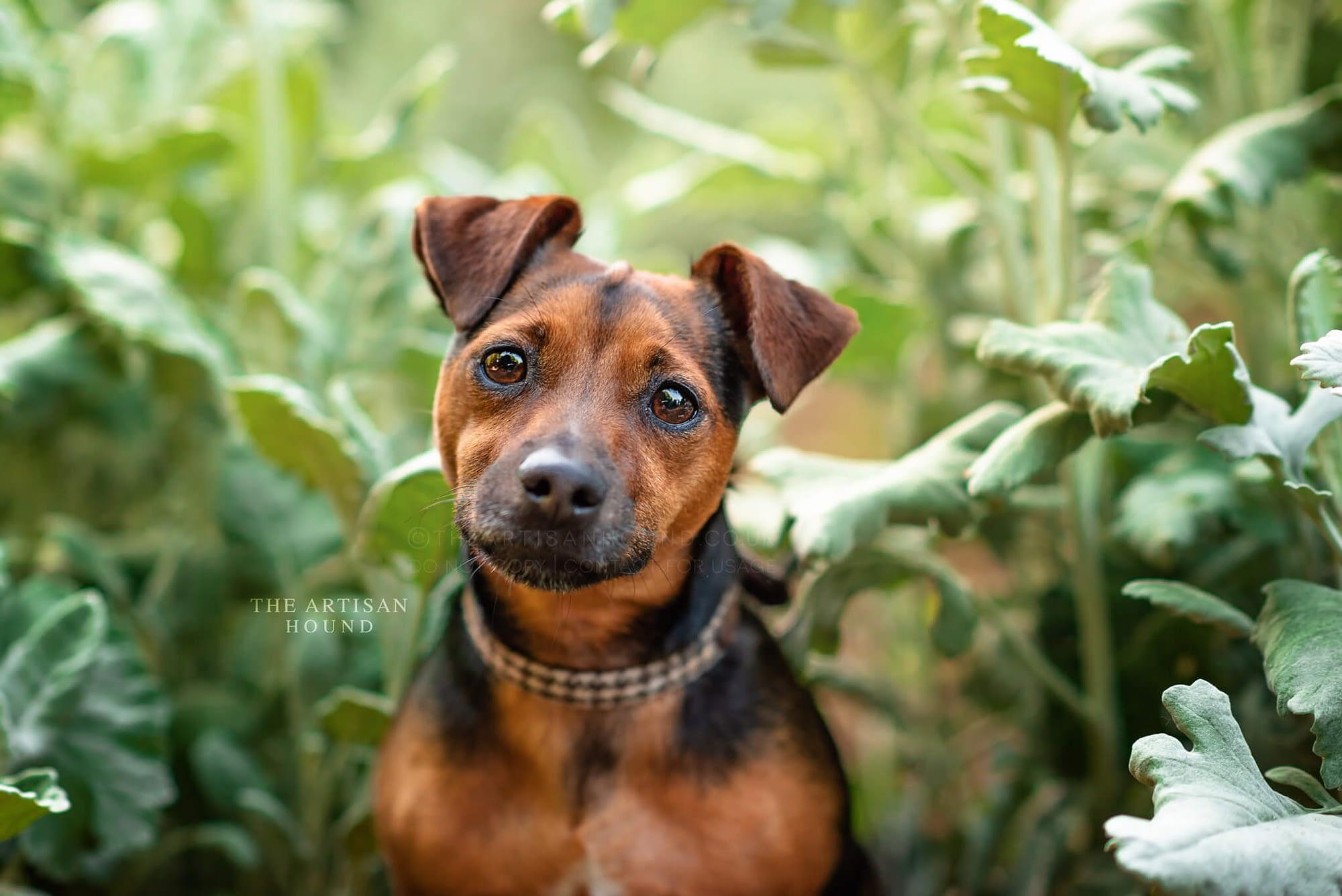Little terrier dog sitting in flowerbed